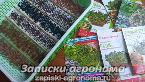 Микрозелень проращивание семян