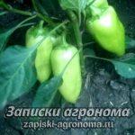 Как выращивать перец