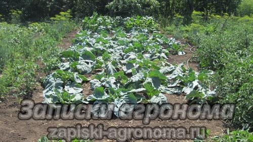 Уход за овощными культурами