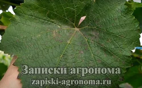 пример поражения растений иодиумом