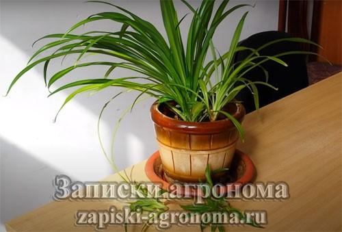 Основные правила ухода за комнатными растениями