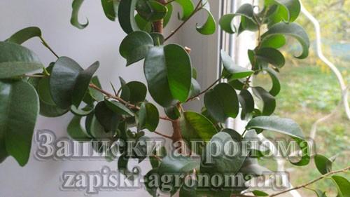 Как ухаживать за комнатными растениями советы новичкам