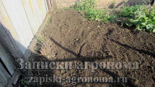 Как посадить чеснок осенью под зиму обработка почвы