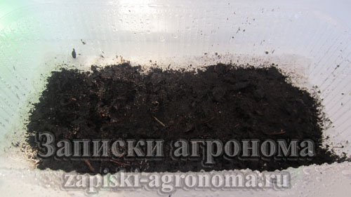 Правила посева микрозелени