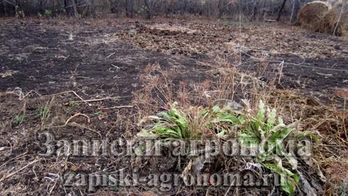 Подготовка огорода к зиме внесение органических удобрений