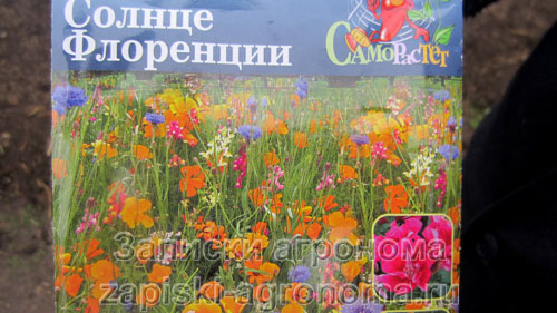 Как выбрать семена цветов