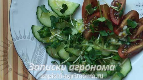 Микрозелень дайкон салат микрогрин овощи салат