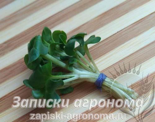 Как вырастить микрозелень дайкона
