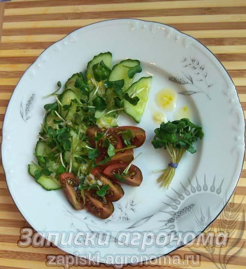 Микрозелень дайкон салат микрогрин овощной салат