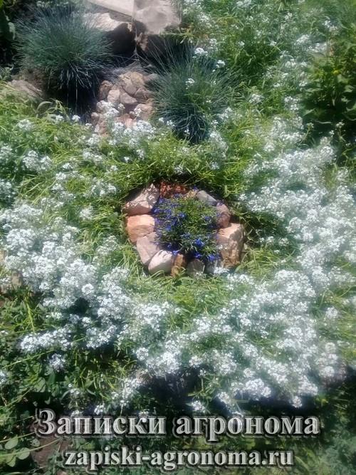 Как создать сад своей мечты на склоне