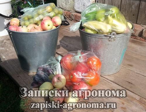 Условия выращивания овощных культур