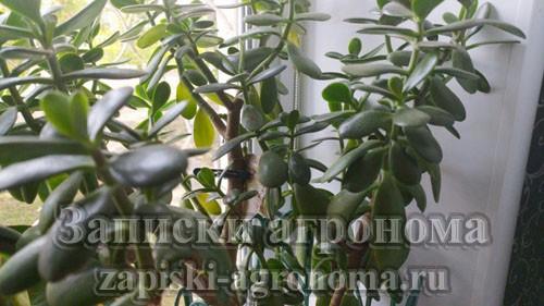 Как ухаживать за комнатными растениями новичкам