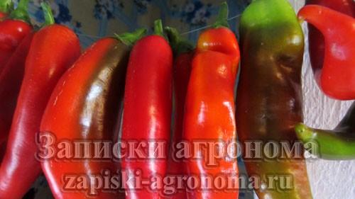 Плоды горького перца