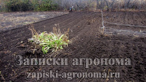 Подготовка огорода к зиме перекопка